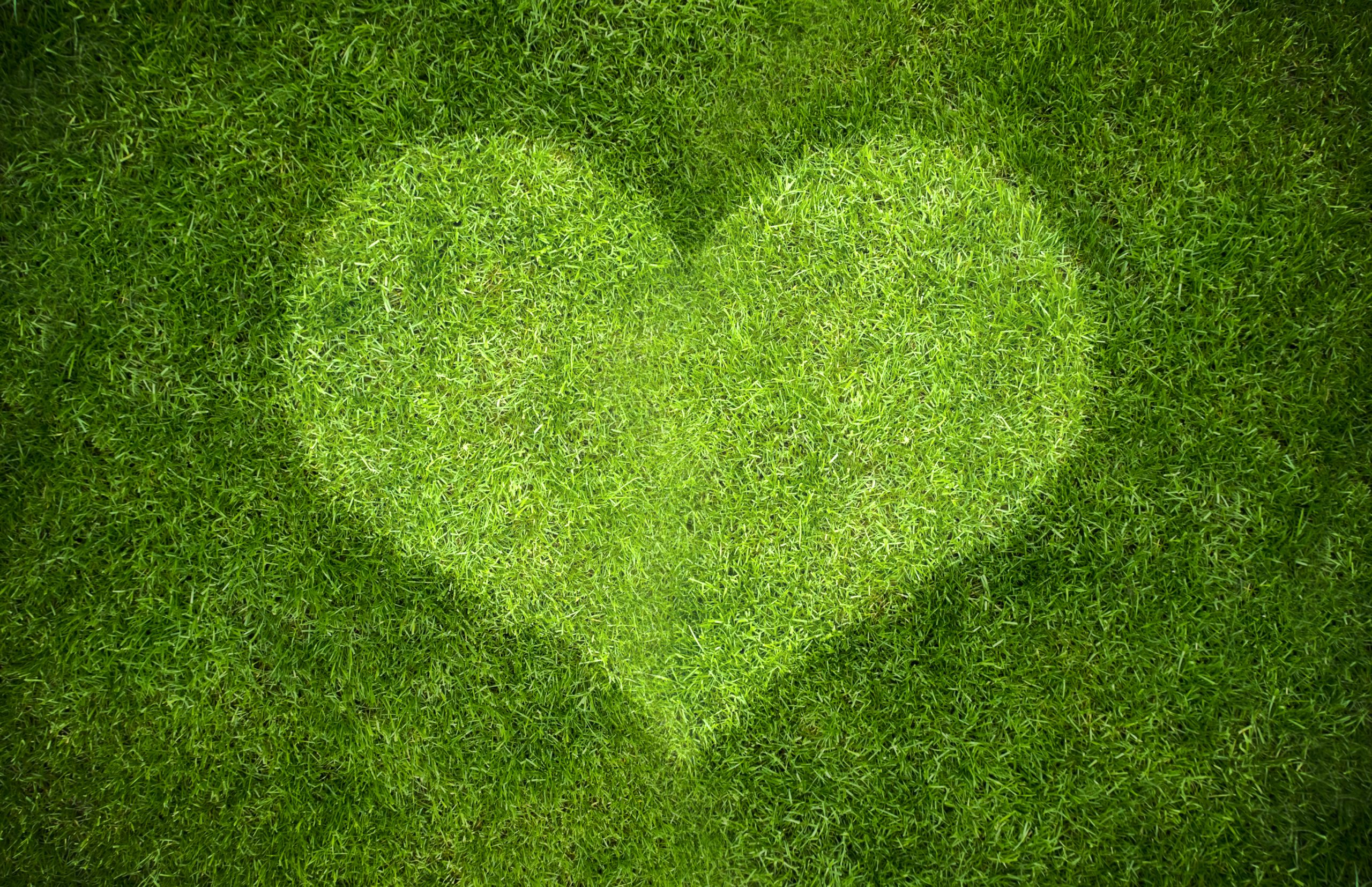 grass with a heart shadow on it