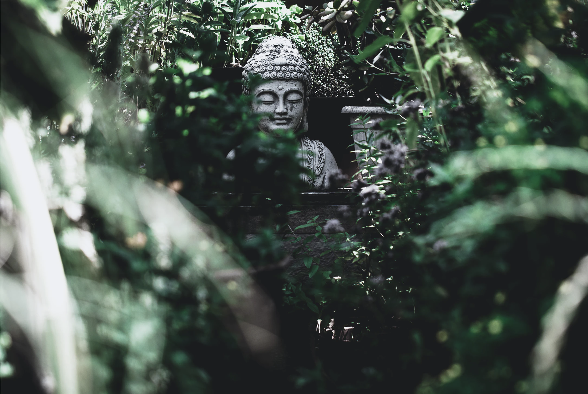 Buddha statue surrounded by greenery